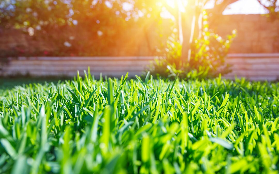 Cost-Effective Ways to Upgrade Your Long Island Yard This Summer